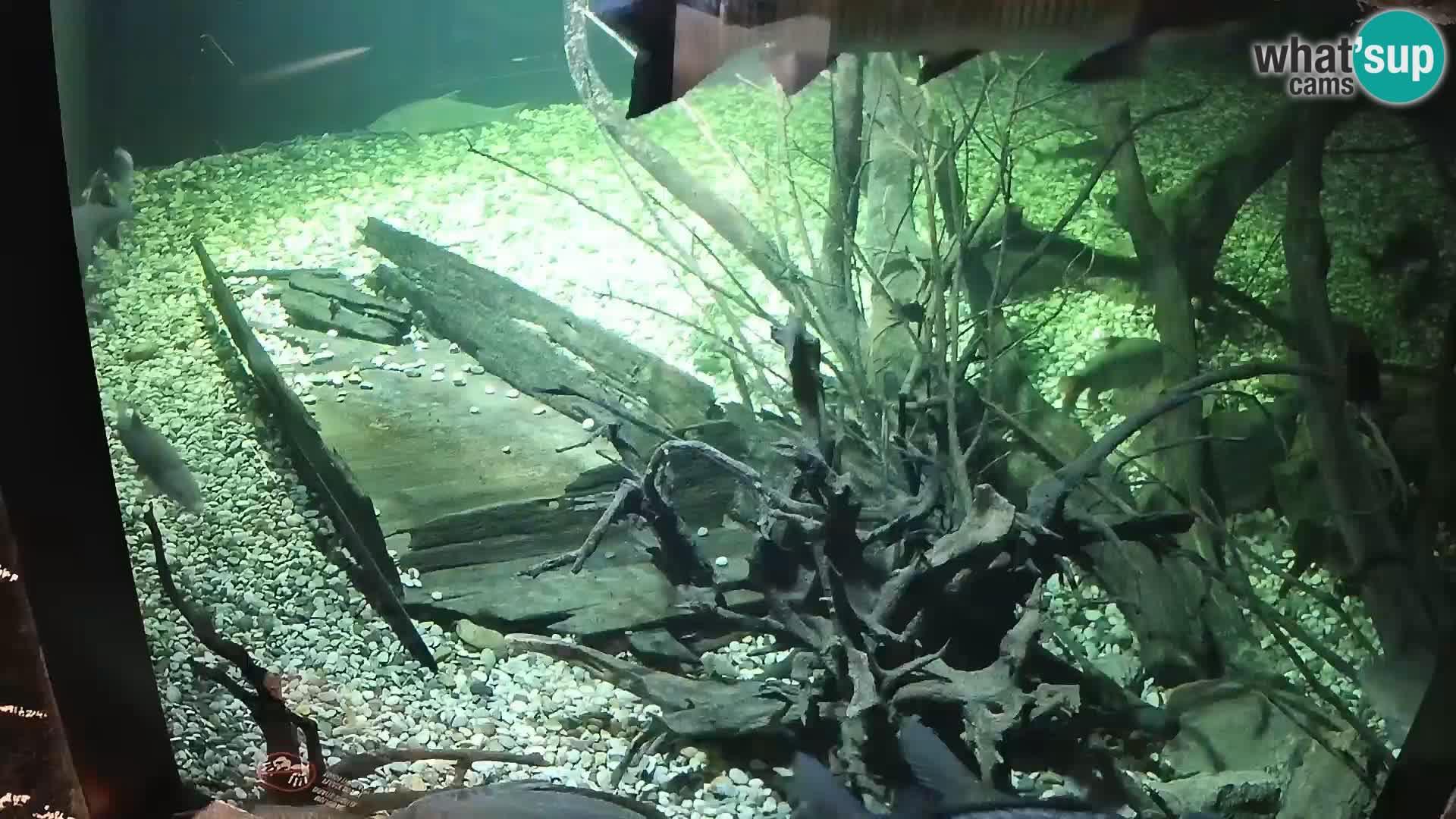 AQUATIKA – Sladkovodni Akvarij spletna kamera Karlovac
