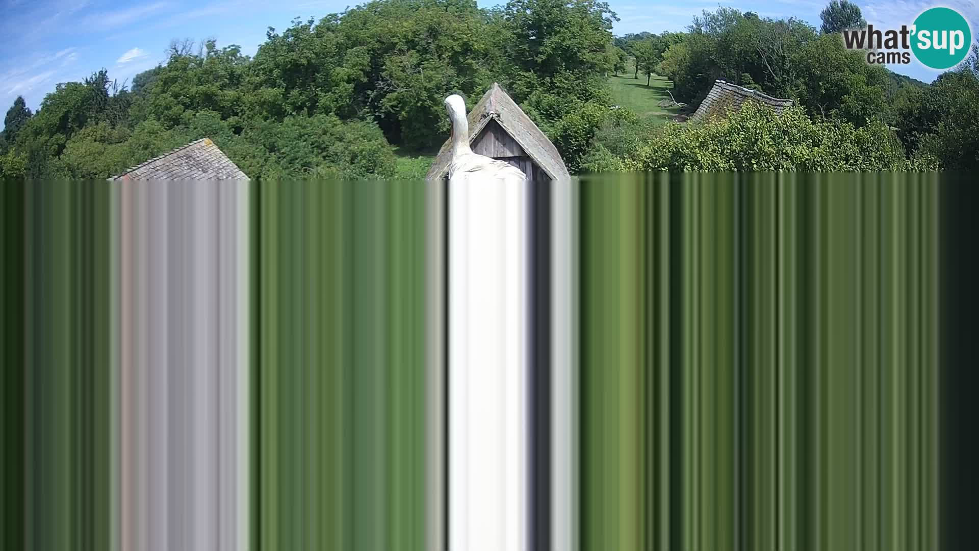 Villaggio delle cicogne europee webcam Parco naturale di Lonjsko polje