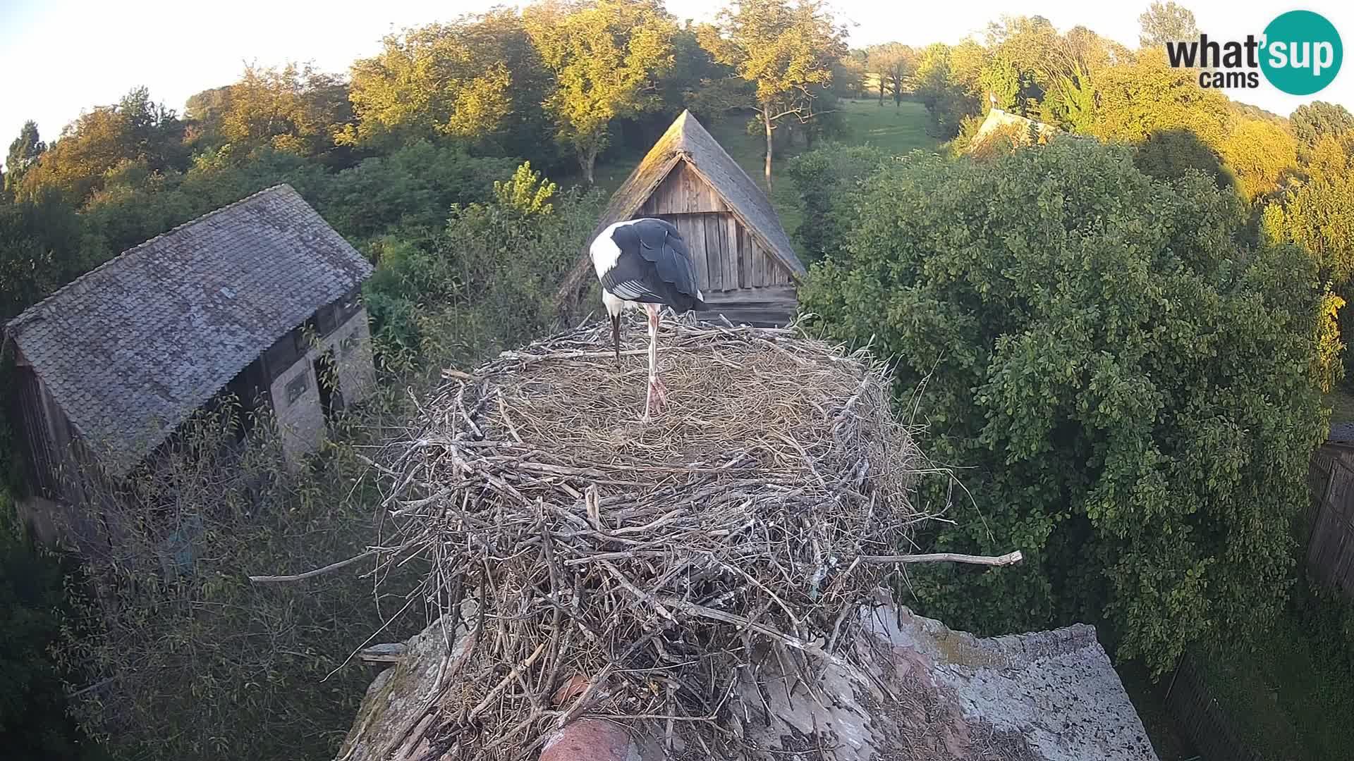 U živo Europsko selo roda – Park prirode Lonjsko polje