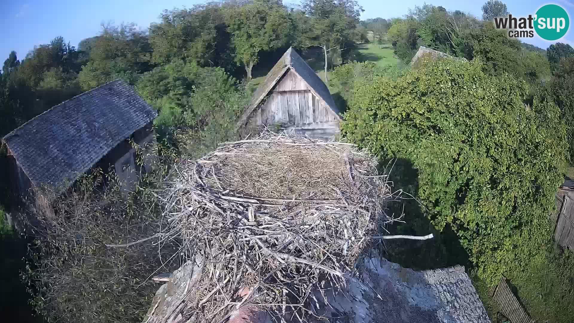 Webcam Europäisches Storchendorf – Naturpark Lonjsko polje