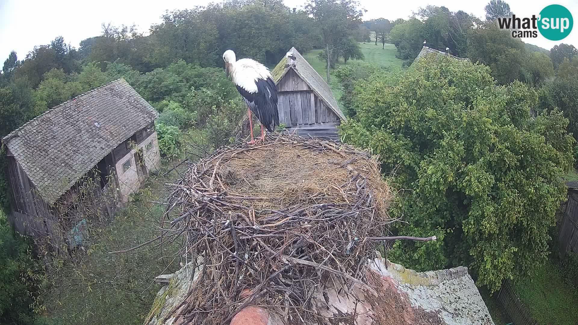 Village européen de cigognes webcam Parc naturel de Lonjsko polje