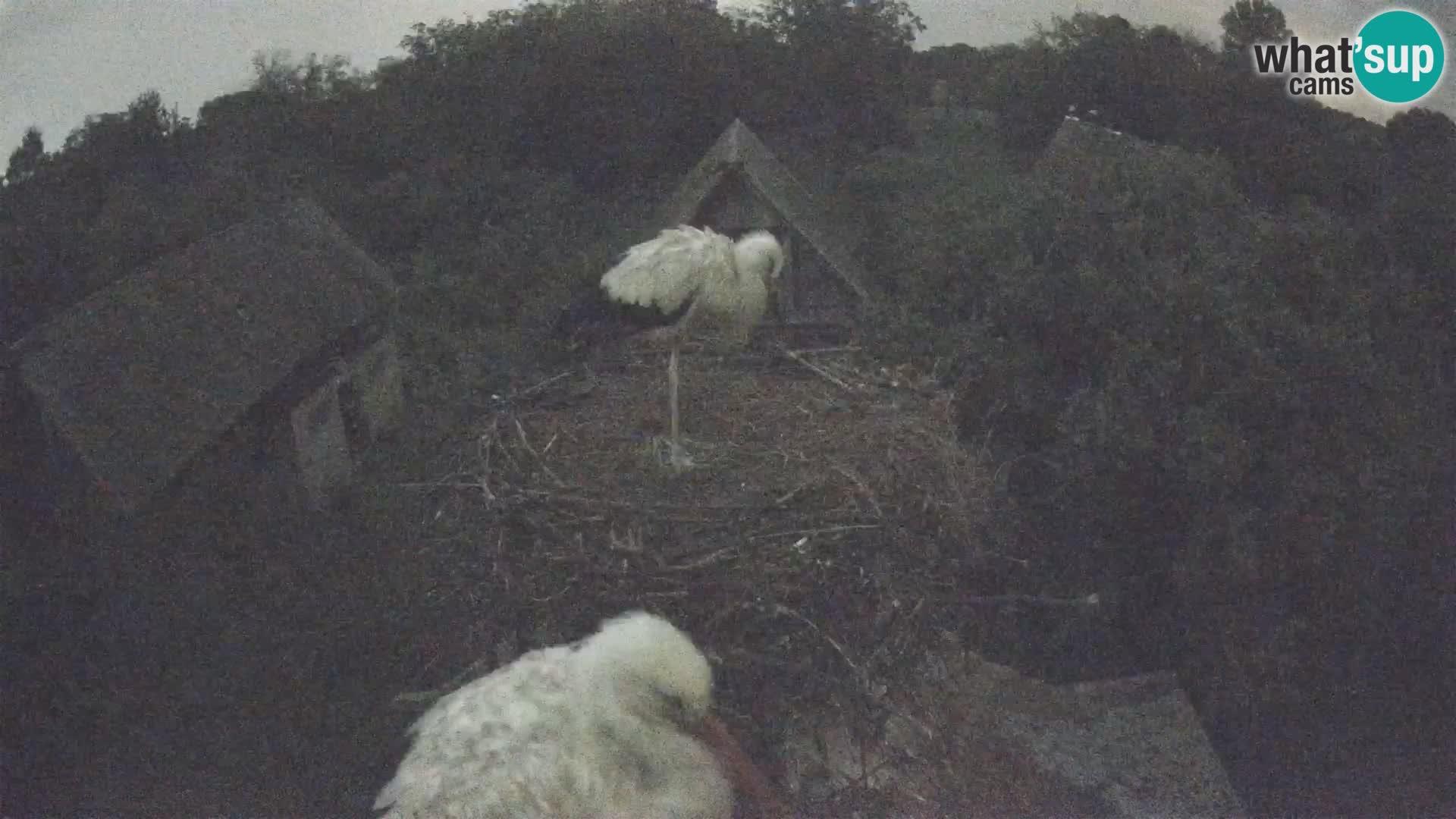 Live webcam European stork village – Lonjsko polje Nature Park