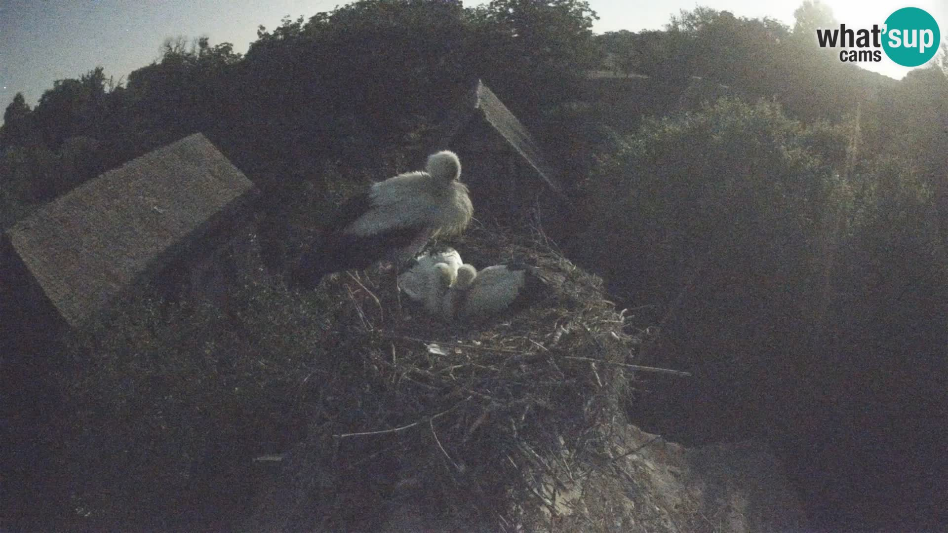 Evropska vas štorklje – Krajinski park Lonjsko polje spletna kamera