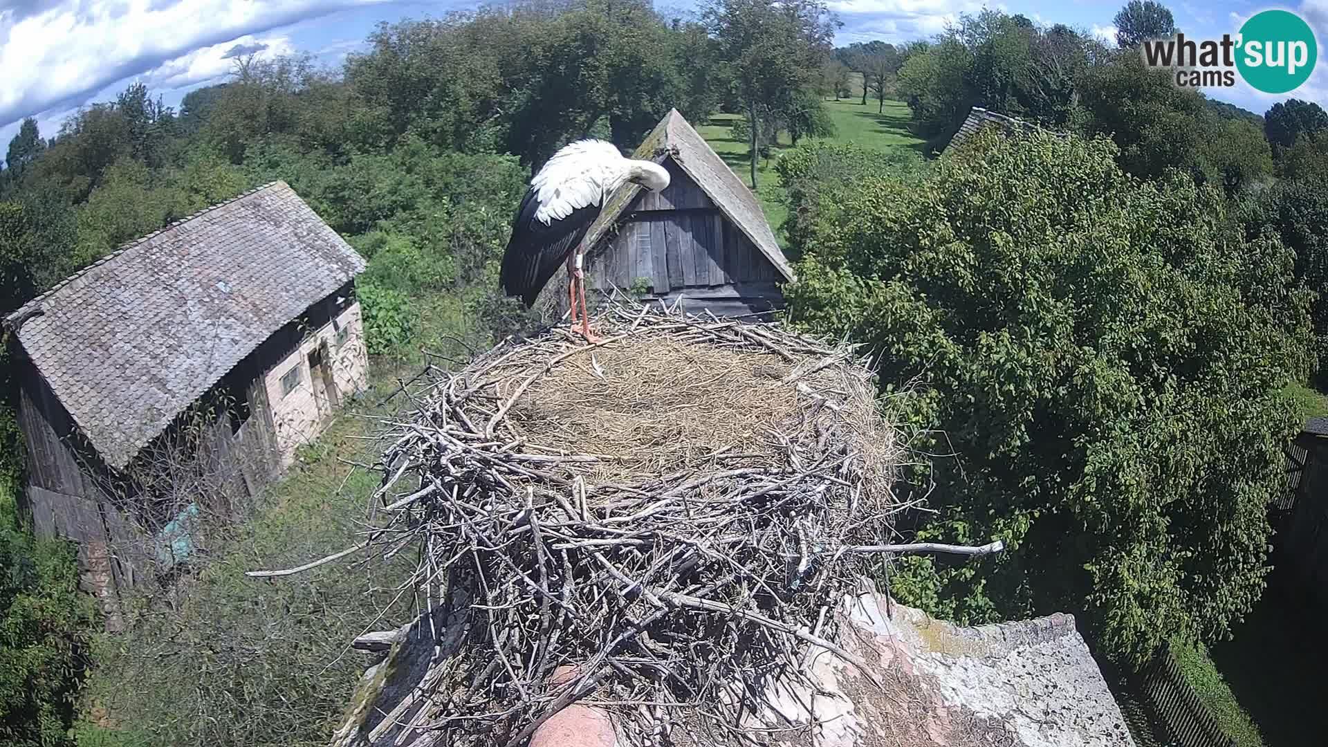 Pueblo europeo de cigüeñas camera en vivo Parque Natural Lonjsko polje