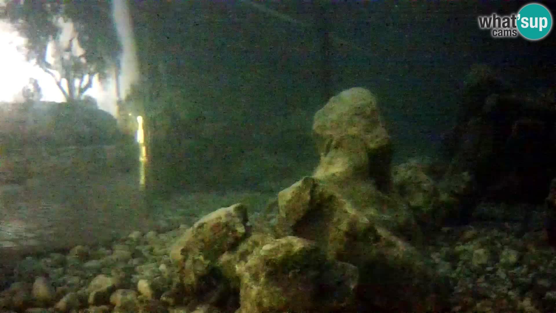 Webcam de l'aquarium marin extérieur de Rogoznica Croatie