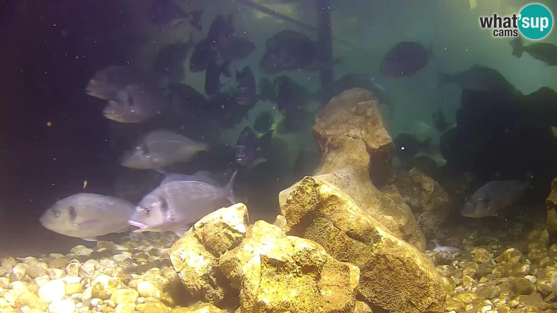 Zunanji morski akvarij Rogoznica spletna kamera Hrvaška