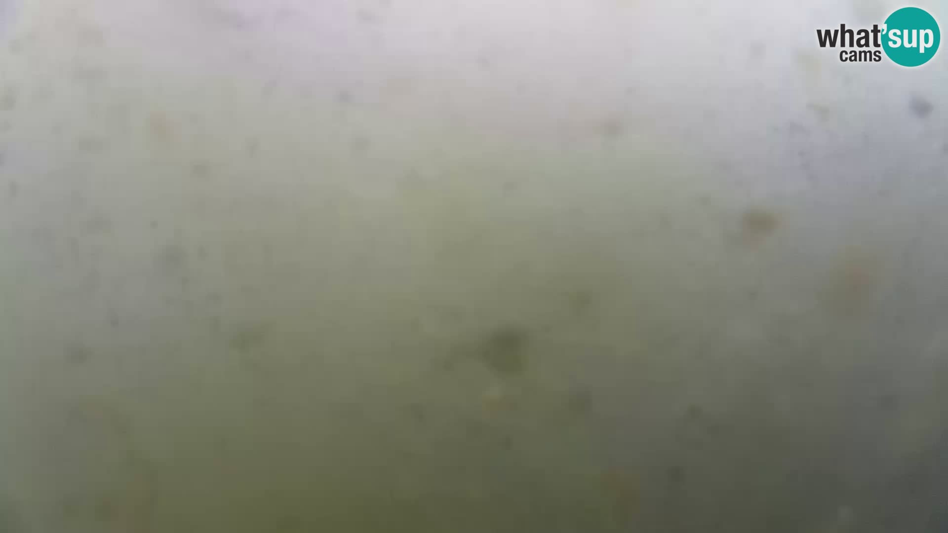 Aquario marino esterno –  Rogoznica livecam Croazia