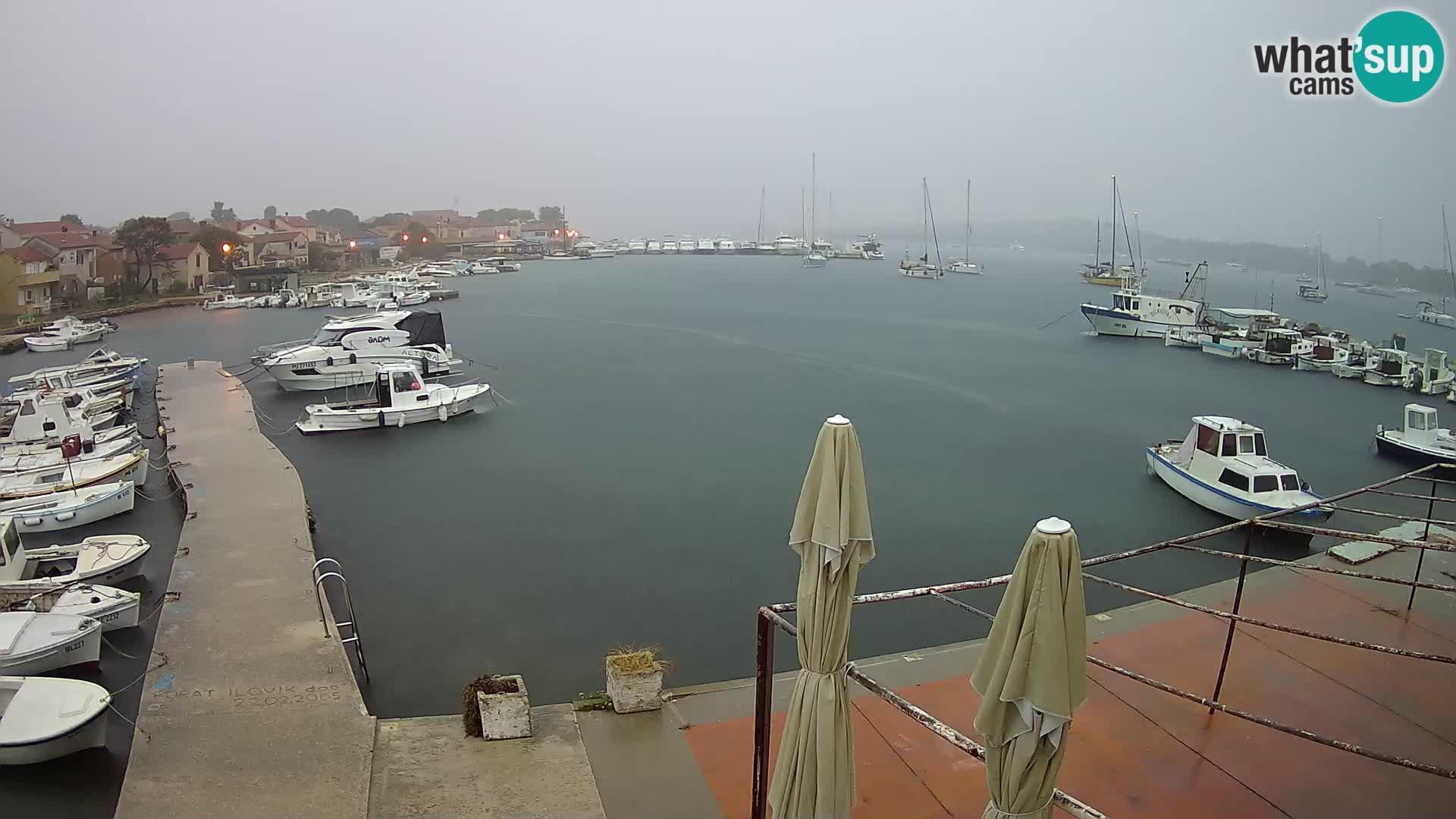 Livecam Asinello – San Piero