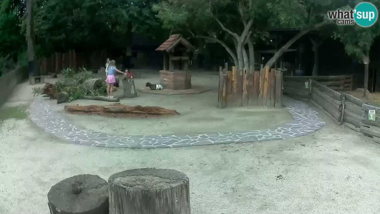 Zoo Zagreb – Cebus apella