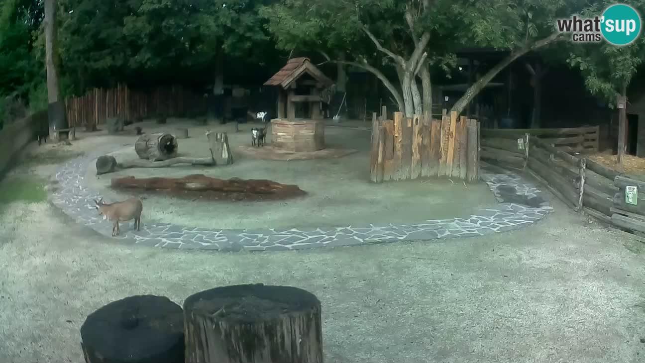 Zoo Zagreb – Cebo dai cornetti
