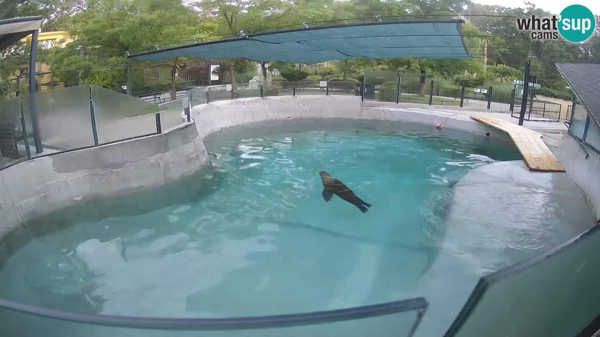 Zoo Zagreb – Otarie de Californie