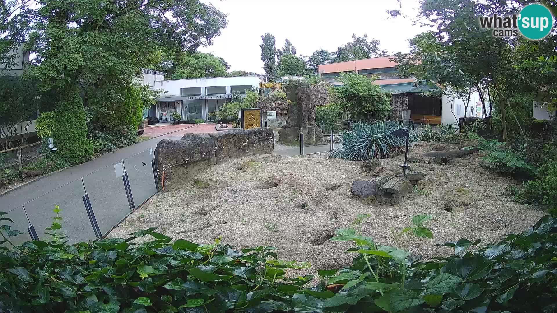 Zoo Zagreb – Merkat