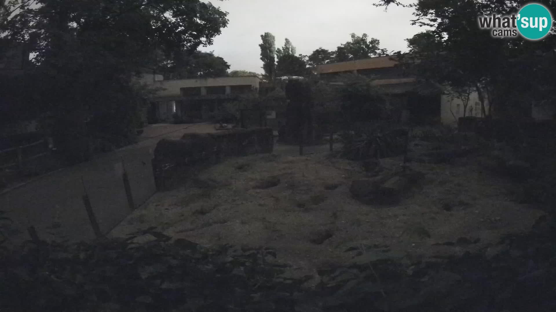 Zoo Zagreb – Erdmännchen