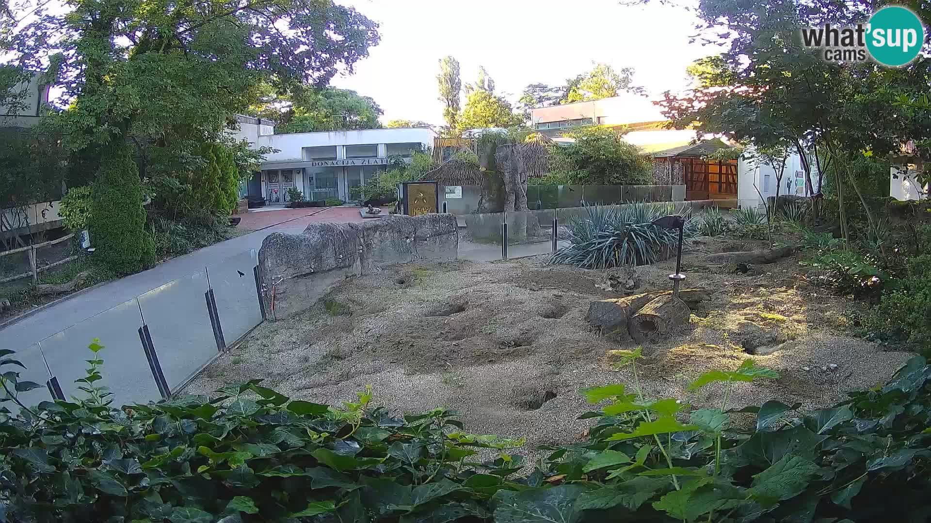 Zoo Zagreb – Meerkat (Suricate)