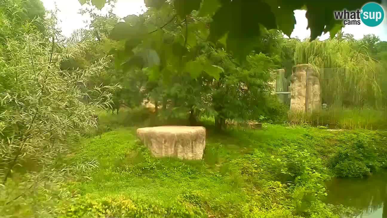 Zoo Zagreb – Lavovi