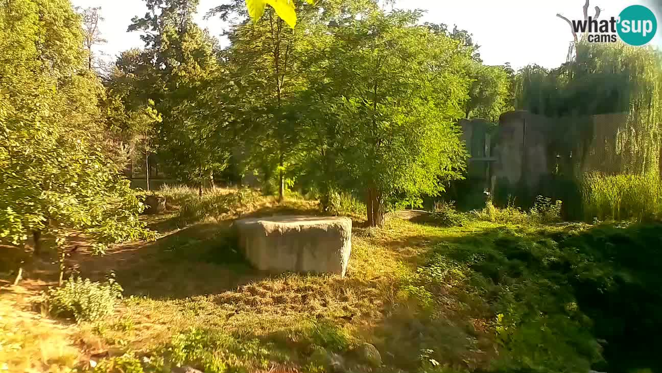 Spletna kamera Zoo Zagreb – Levi