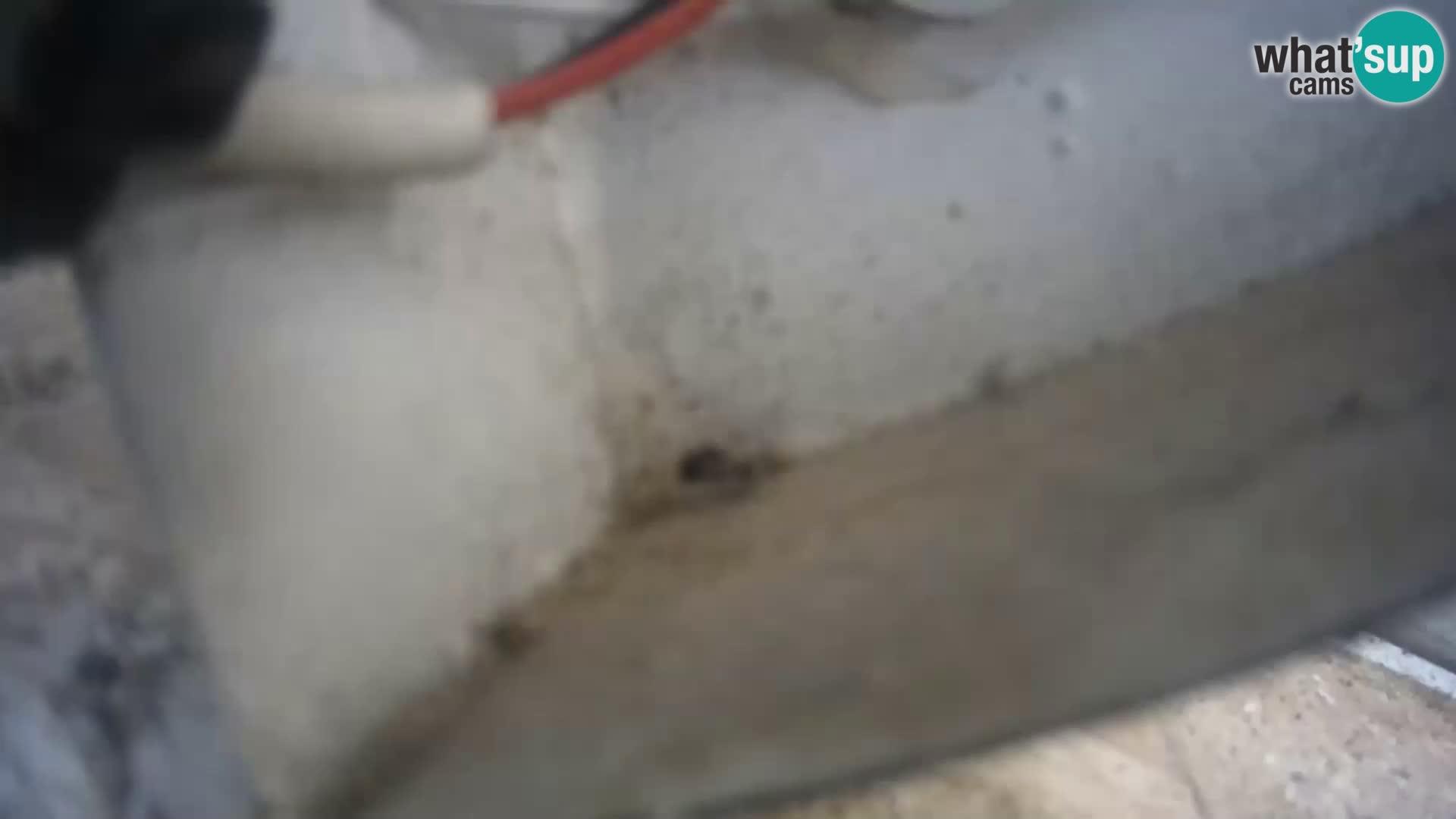Webcam Rom – Navona Platz – Neptunbrunnen