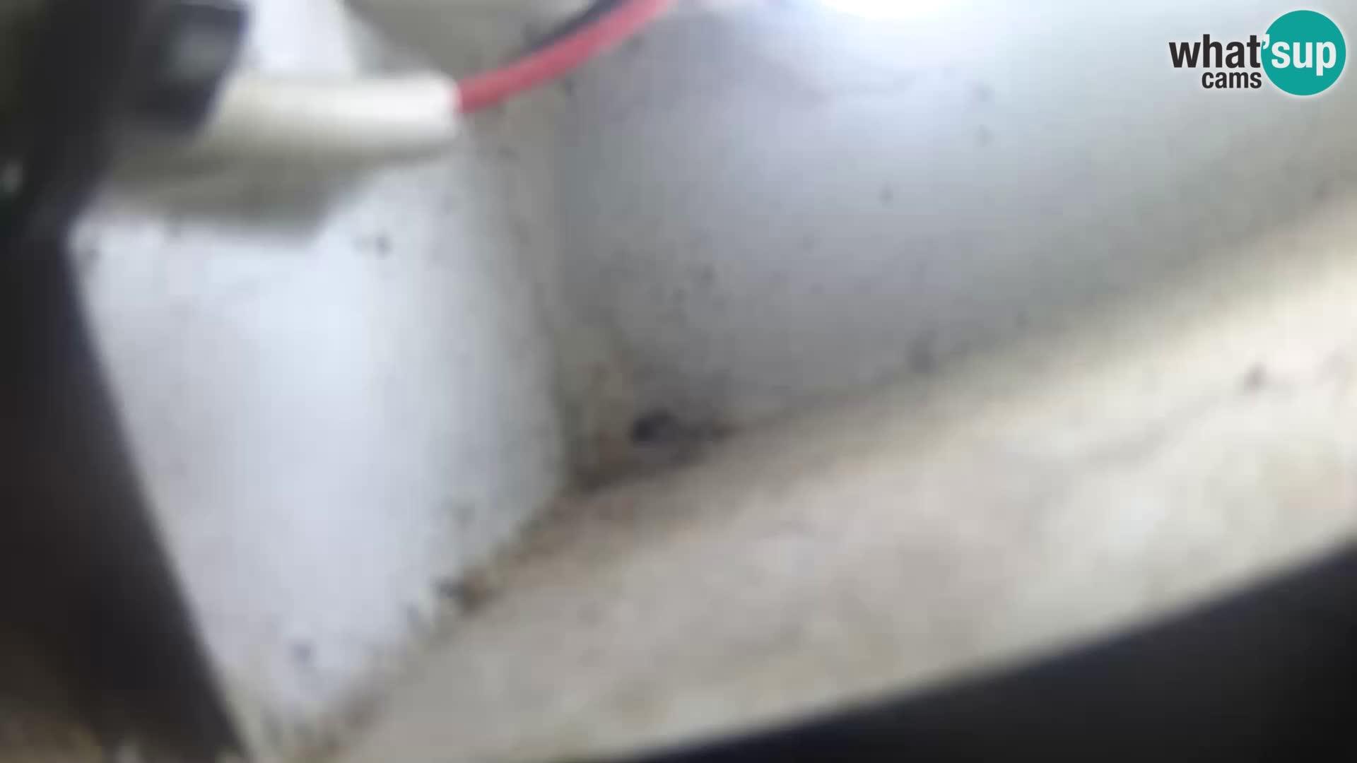 Webcam Rim – trg Navona – Neptunov vodomet