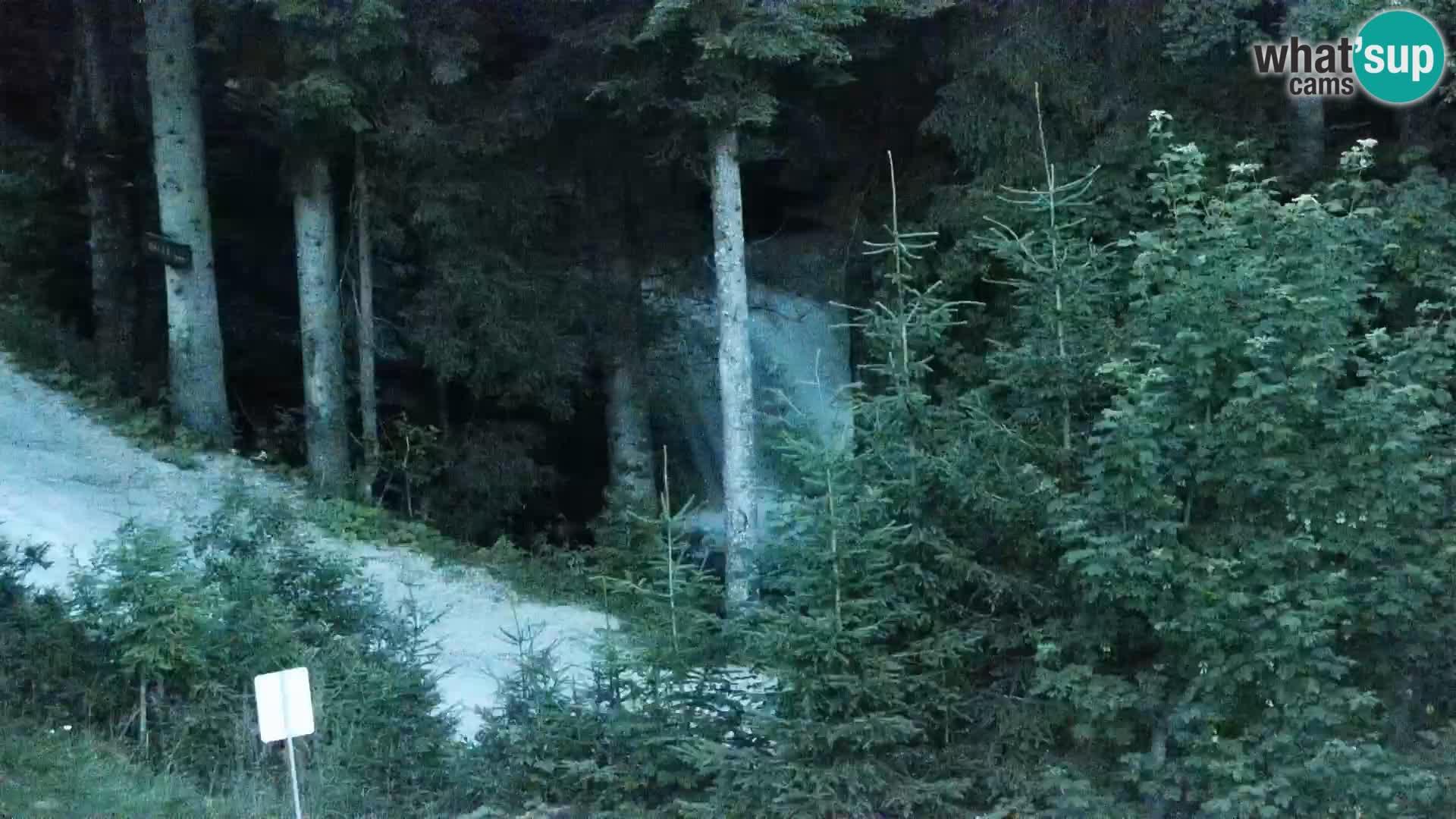 Webcam Rogla Wohnungen Dandi – Jurgovo