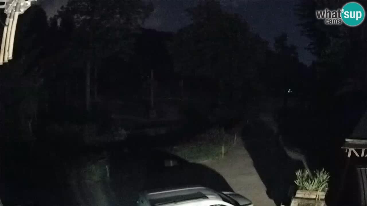 Webcam live Zoo Lubiana – Giraffe