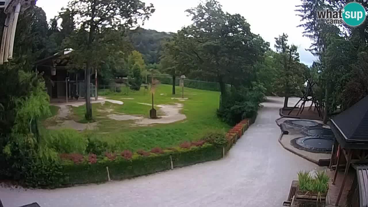Webkamera Zoo Ljubljana – Žirafe