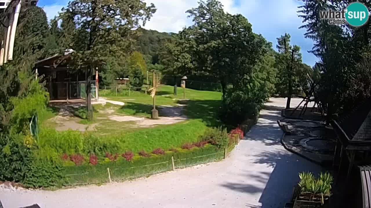 Spletna kamera Živalski vrt Ljubljana – Žirafe