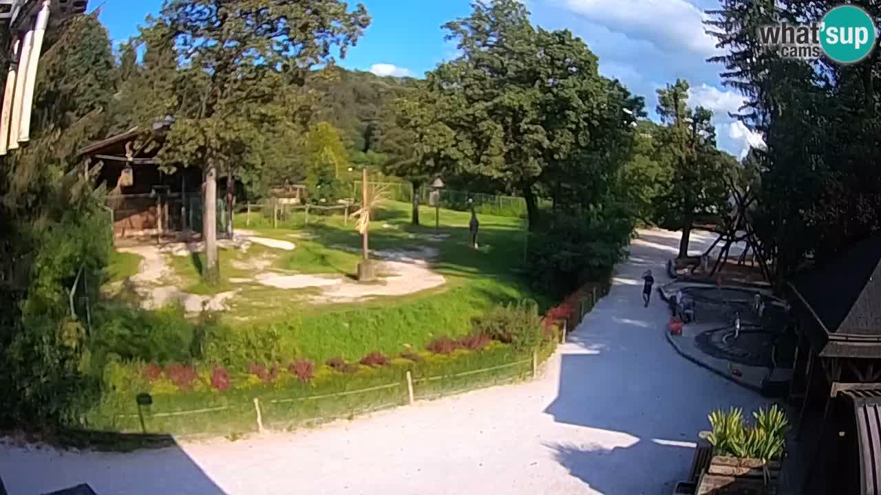 Webcam Zoo Ljubljana – Giraffes