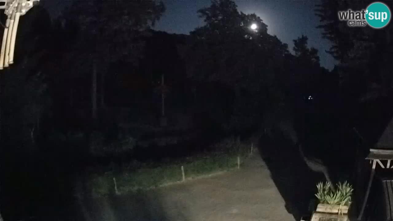 Webcam Zoo Ljubljana – Jirafas