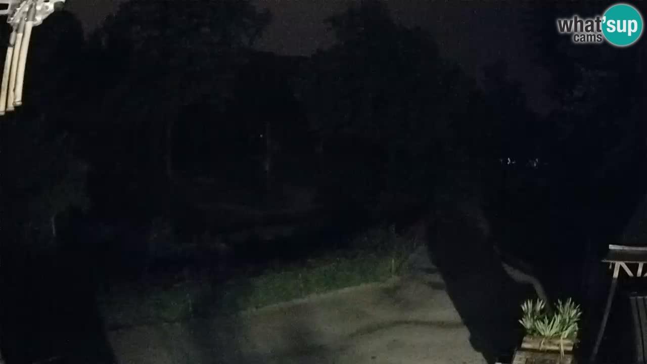 Webcam Zoo Ljubljana – Giraffen