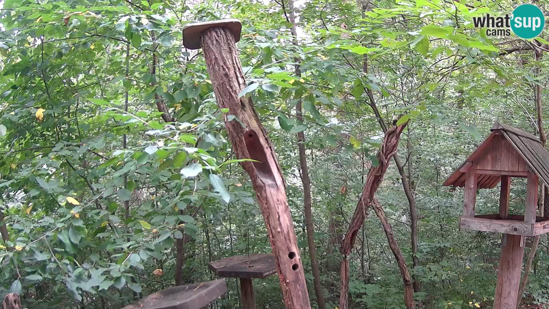 Bird feeders at ZOO Ljubljana webcam