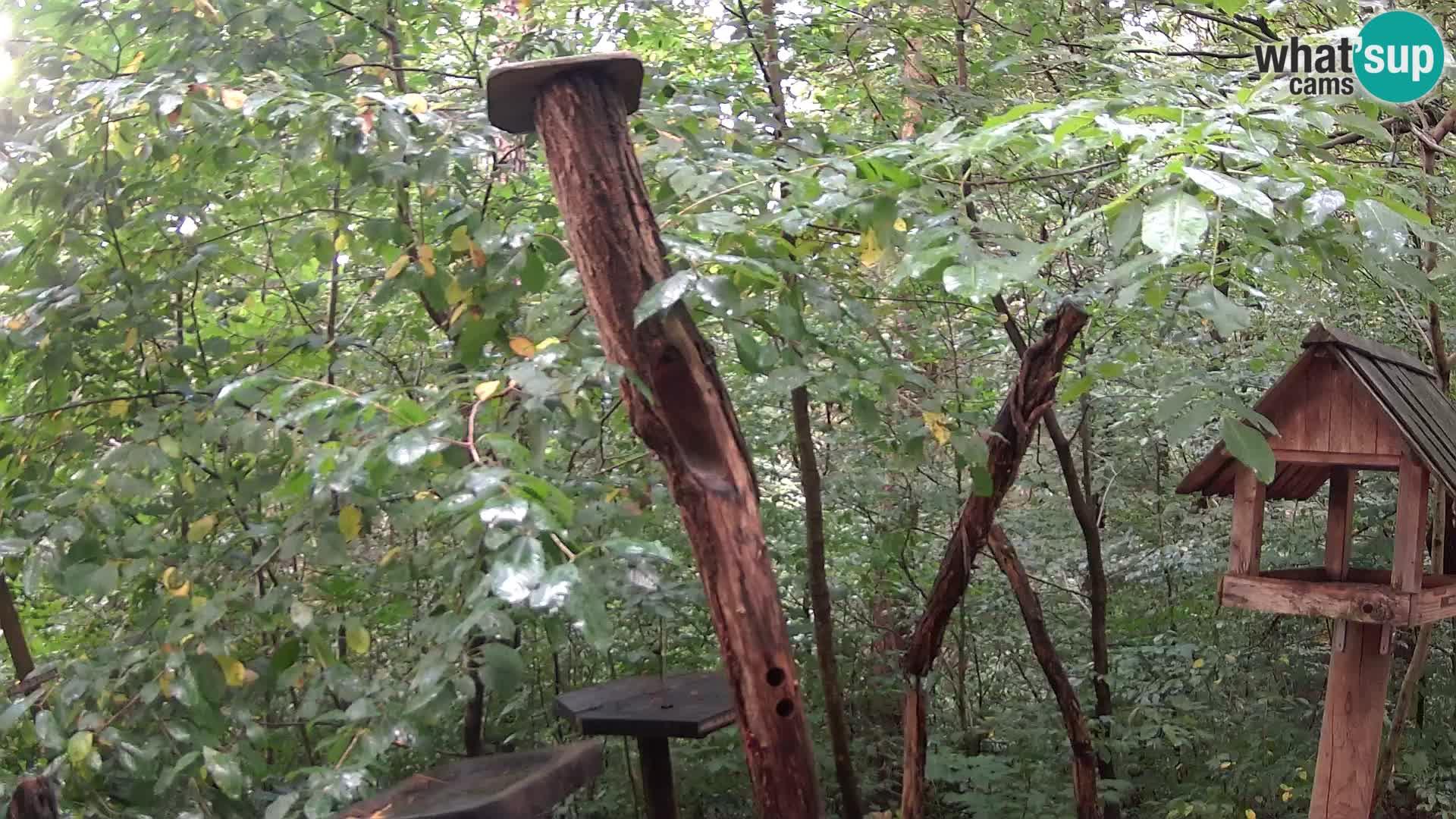 Vogelfutterhäuschen im ZOO webcam Ljubljana