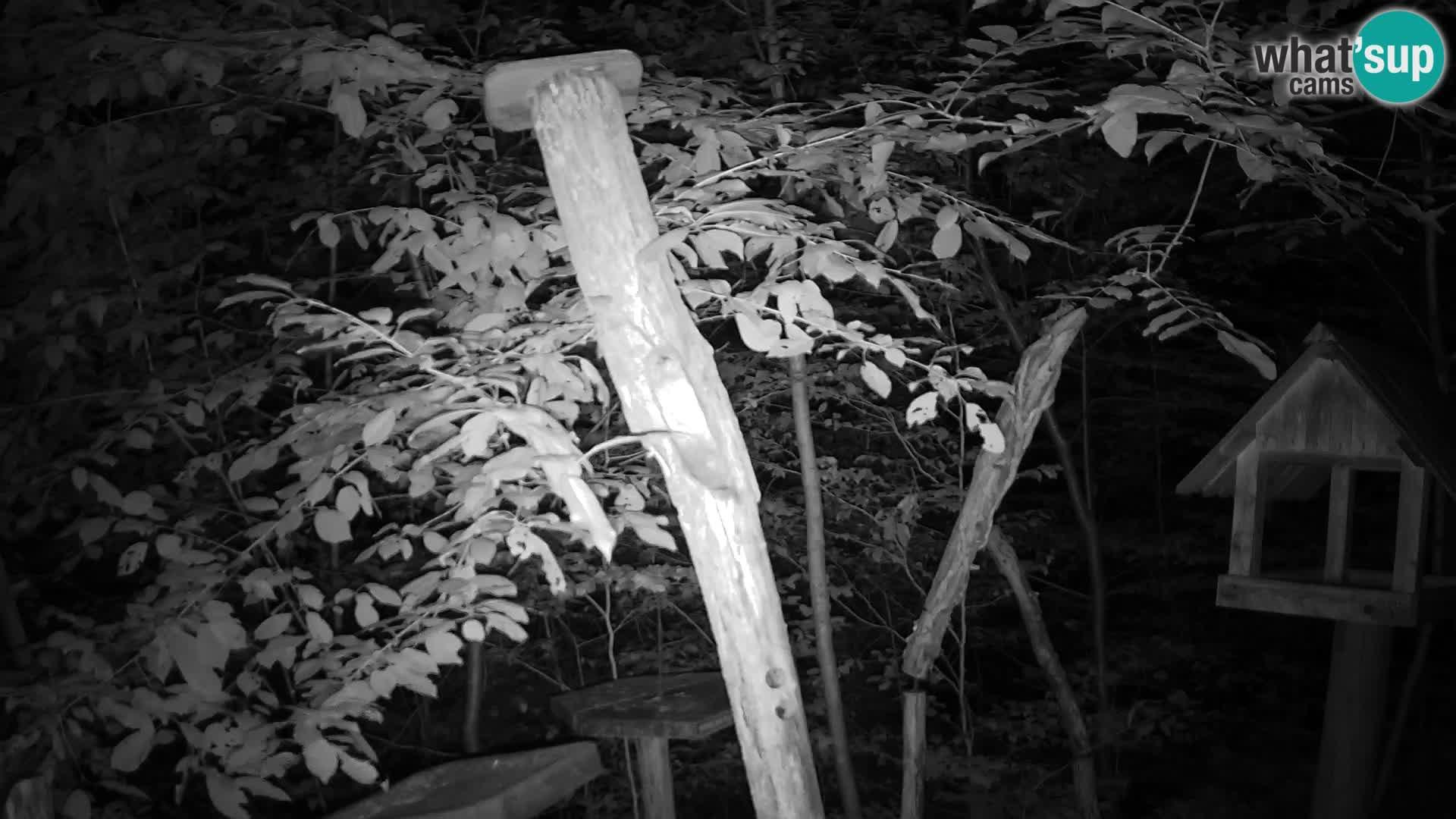 Mangiatoie per uccelli allo ZOO di Lubiana livecam