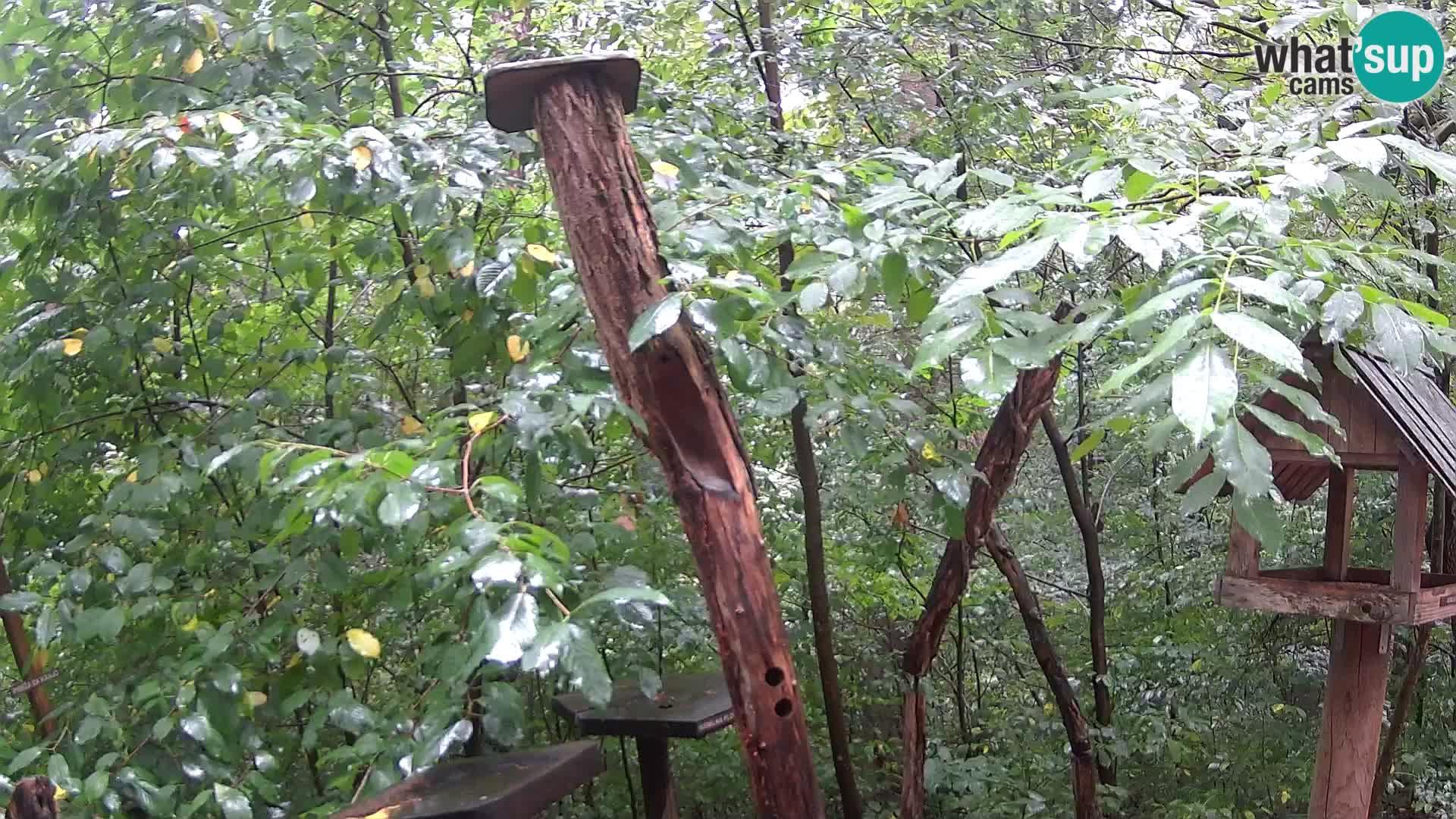 Hranilice za ptice u ZOO web kamera Ljubljana