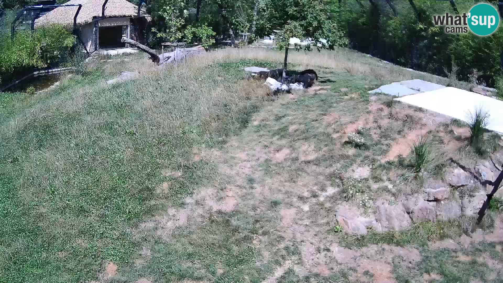 Živalski vrt Ljubljana kamera v živo Levi