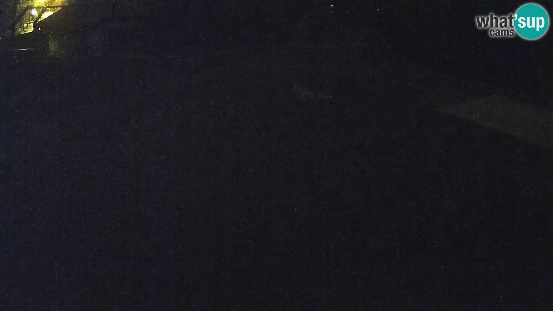 Live Ljubljana Zoo webcam Lion