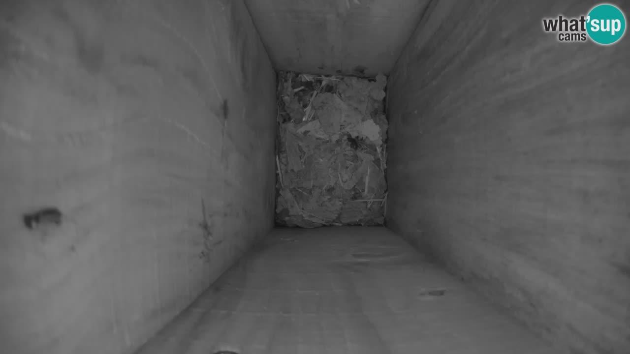 Webcam Mangiatoie per uccelli allo ZOO di Lubiana