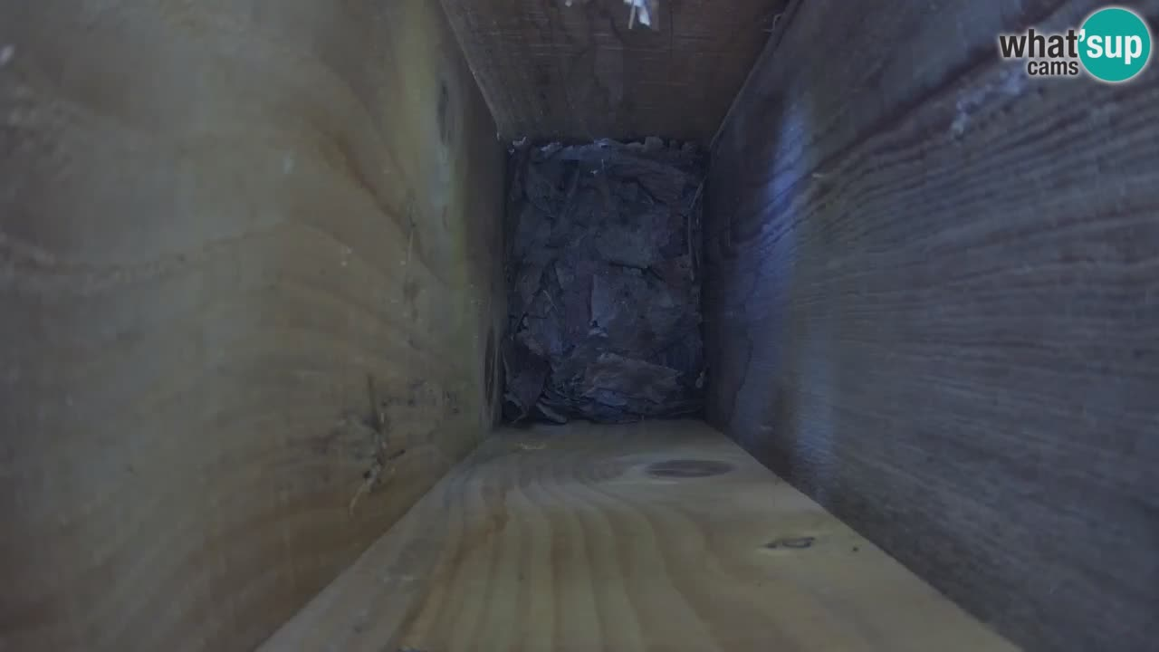 Live webcam Mangeoires pour oiseaux au ZOO Ljubljana