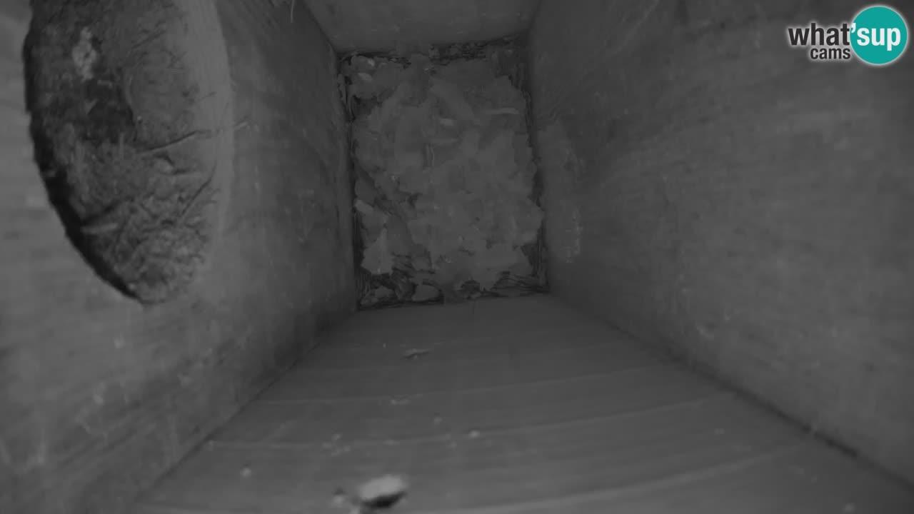 Kamera v živo  ptičja krmilnica v ljubljanskem zivalskem vrtu