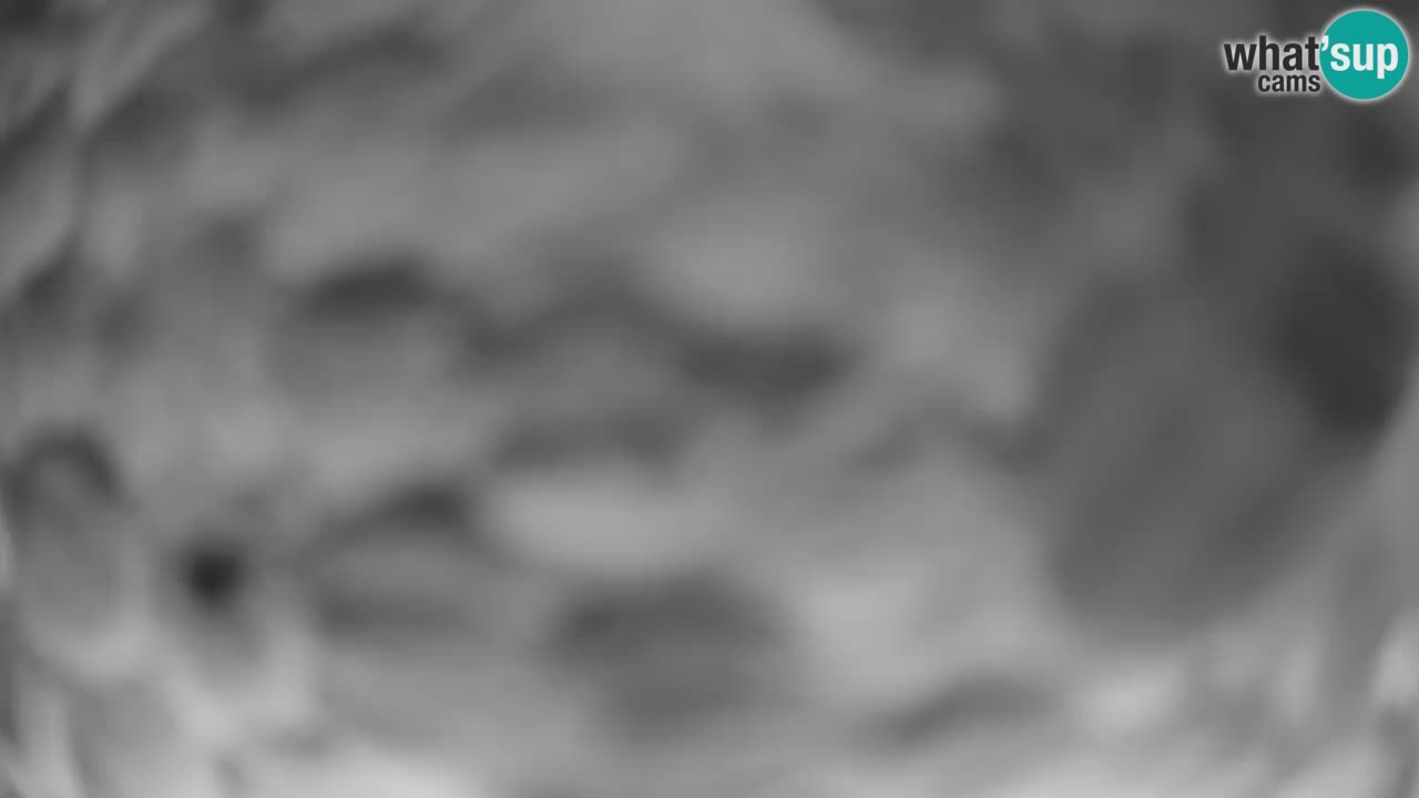 Webcam Comederos para pájaros en Ljubljana ZOO