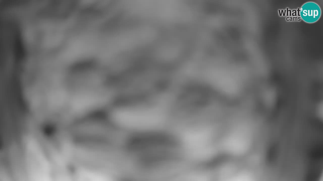 Webcam live Mangeoires pour oiseaux au Ljubljana ZOO