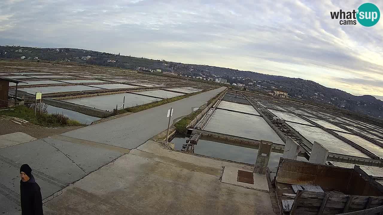 Seča – Panorama in soline