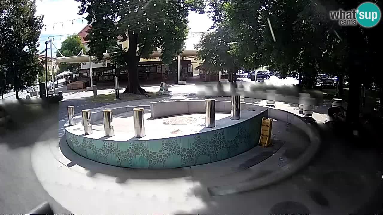 Spletna kamera Fontana Piv – Zeleno zlato Žalec