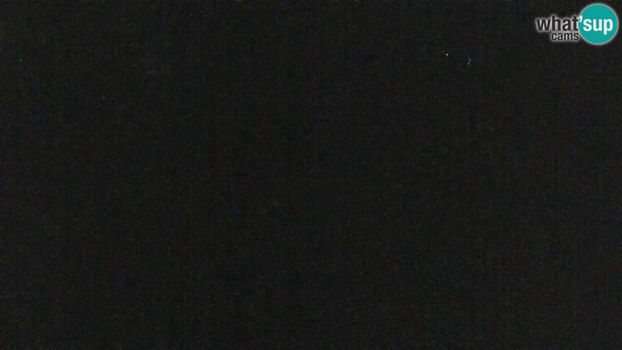 Vari noir et blanc – Ljubljana ZOO  livecam
