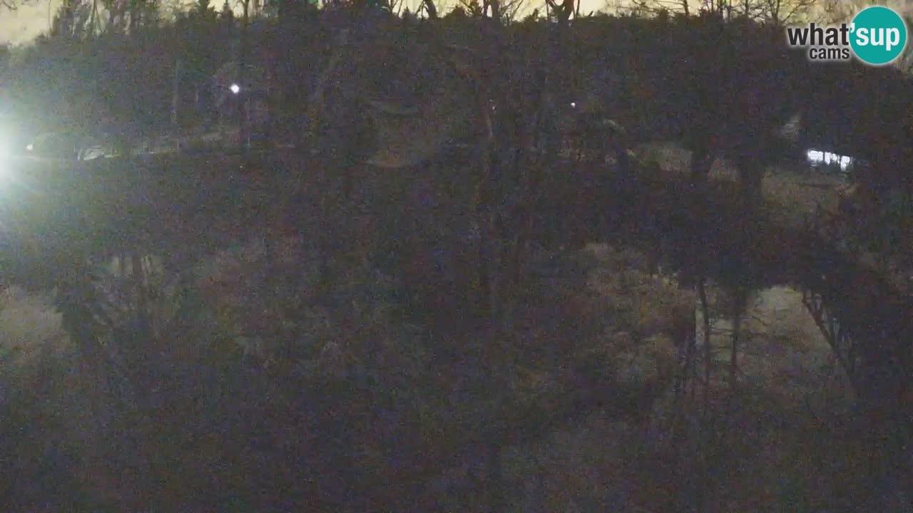 Südlicher Gelbwangen-Schopfgibbon Zoo Ljubljana webcam
