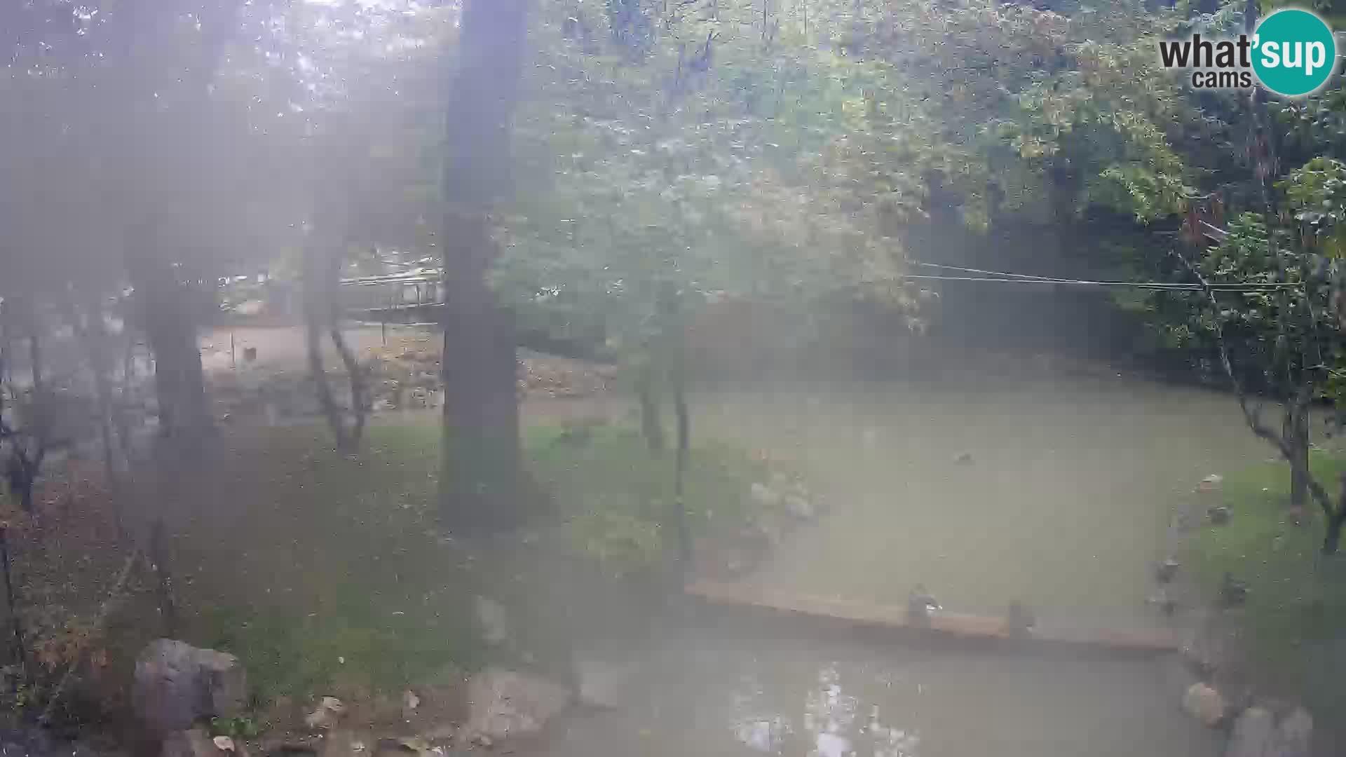 Saimiri nello ZOO di Lubiana Livecam